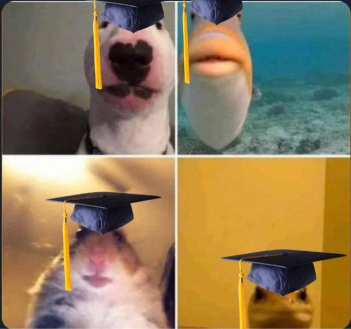 Zoom graduates animals