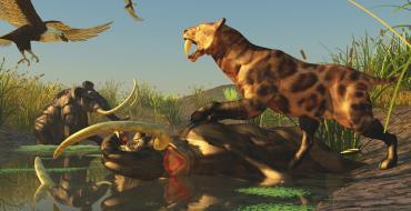 digital imagining of ancient mammals