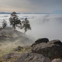 Spencer Butte view with fog